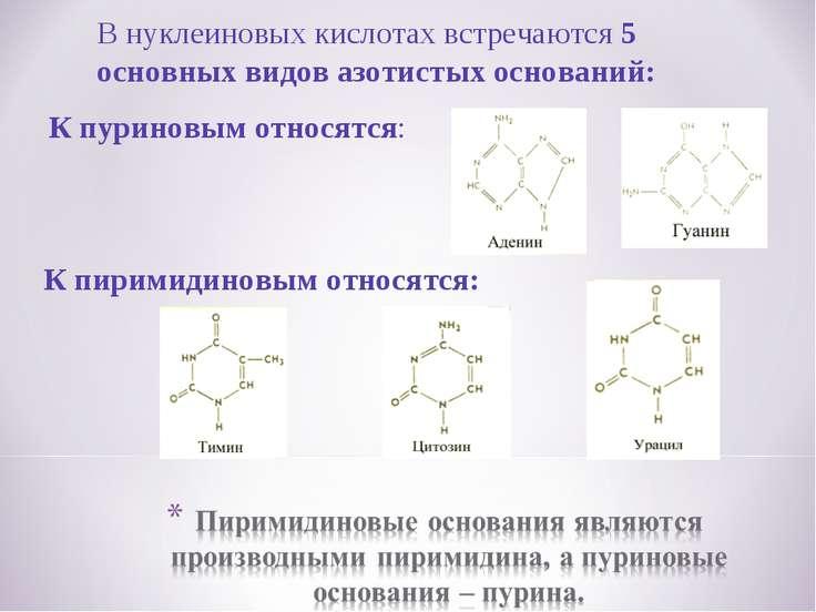 В нуклеиновых кислотах встречаются 5 основных видов азотистых оснований: К пу...