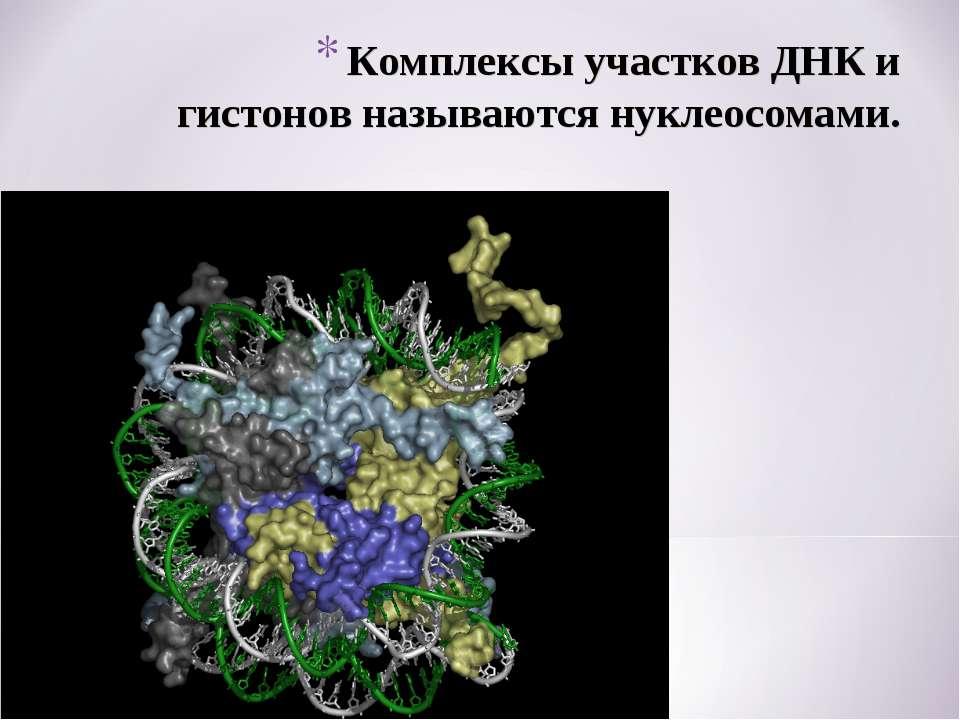 Комплексы участков ДНК и гистонов называются нуклеосомами.