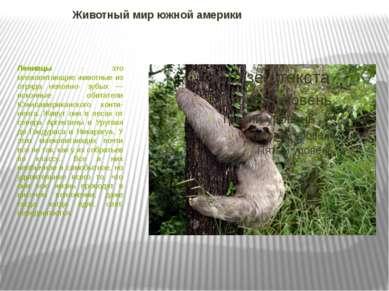 Животный мир южной америки  Ленивцы - это млекопитающие животные из отряда н...