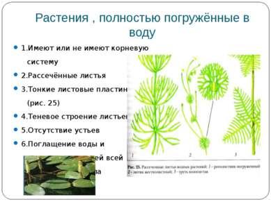 Растения , полностью погружённые в воду 1.Имеют или не имеют корневую систему...