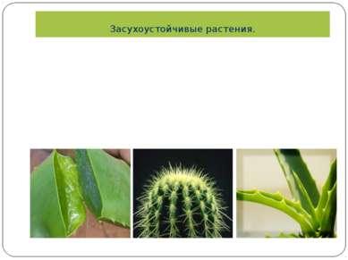 Засухоустойчивые растения. Вязкость сока листьев Мясистые листья Мясистые, то...