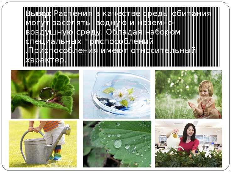 Вывод: Растения в качестве среды обитания могут заселять водную и наземно-воз...