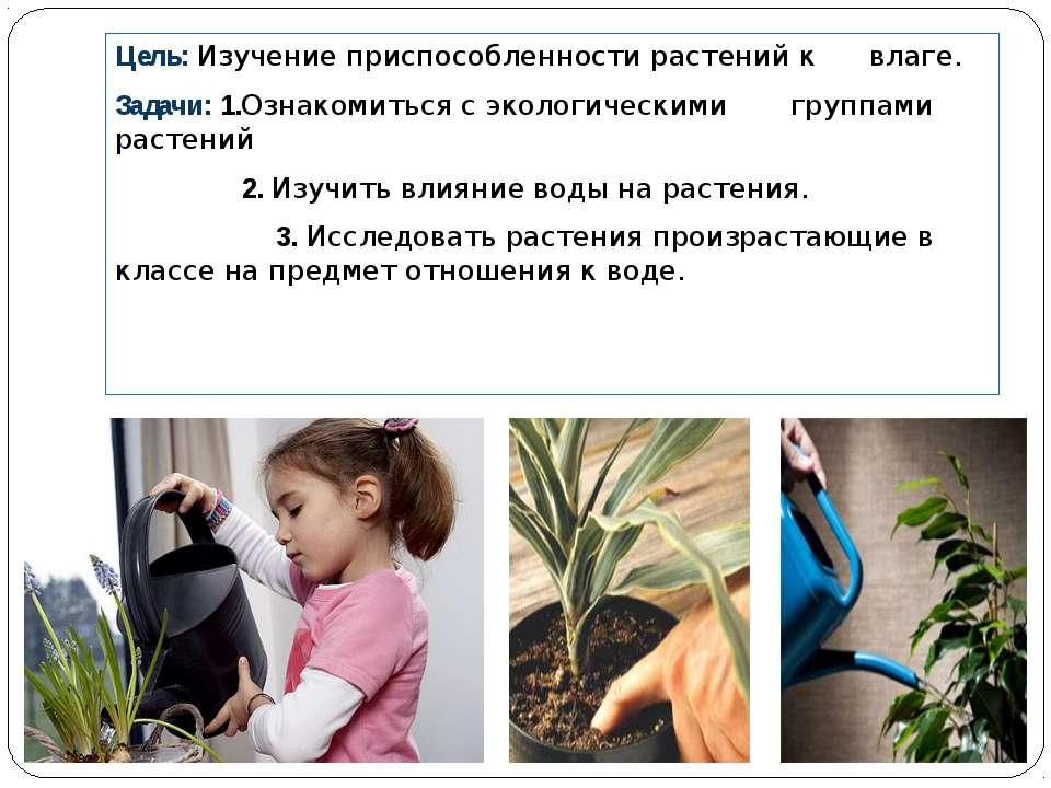 Цель: Изучение приспособленности растений к влаге. Задачи: 1.Ознакомиться с э...