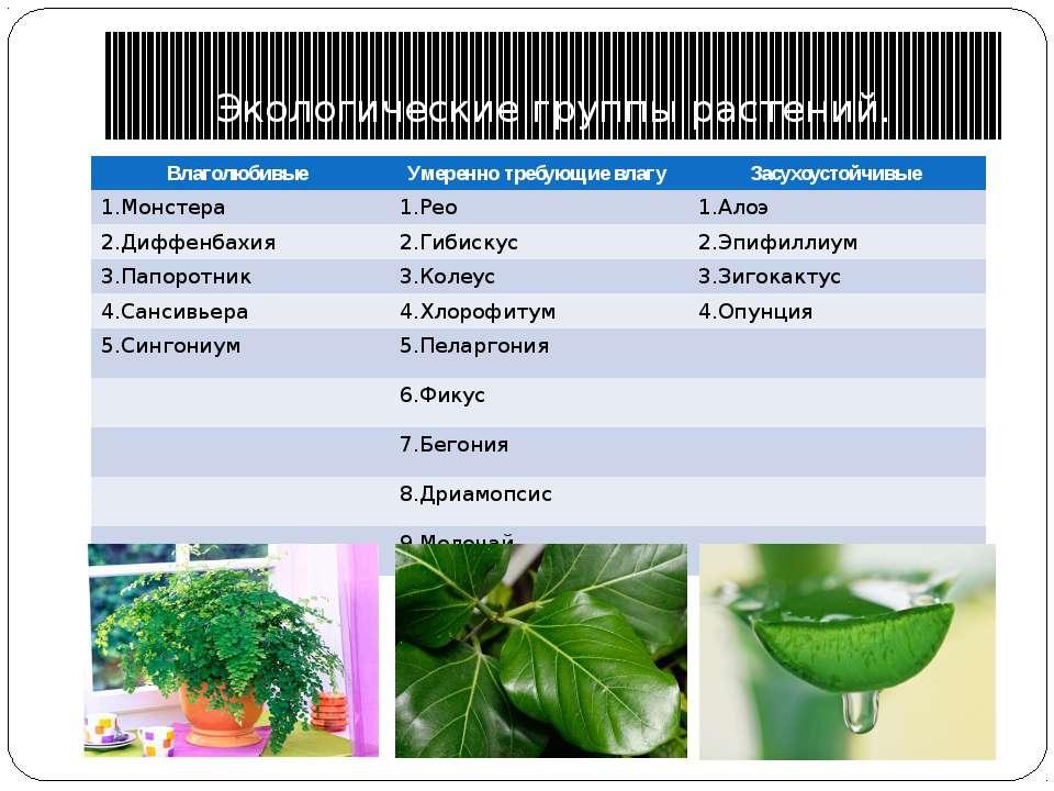 Экологические группы растений. Влаголюбивые Умеренно требующие влагу Засухоус...