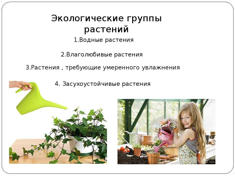 Экологические группы растений 1.Водные растения 2.Влаголюбивые растения 3.Рас...