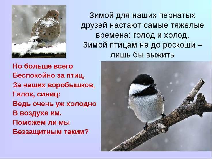 Зимой для наших пернатых друзей настают самые тяжелые времена: голод и холод....