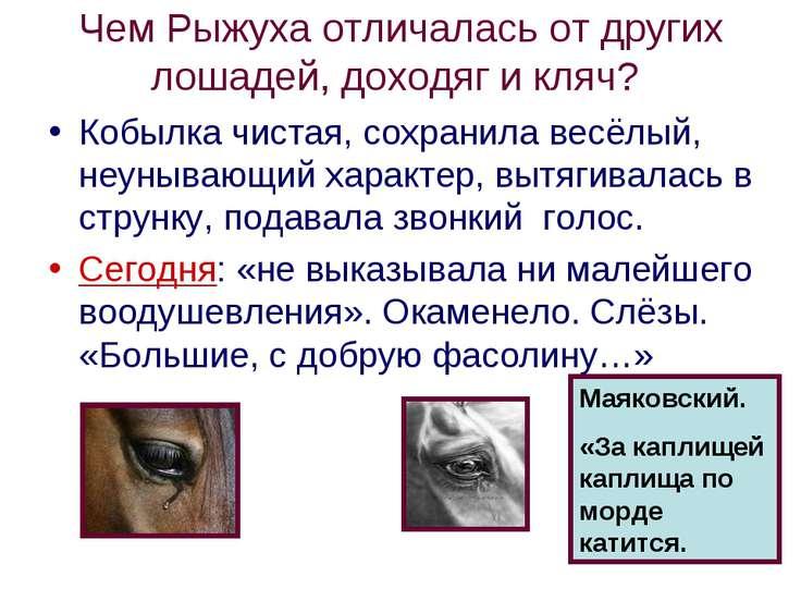 Чем Рыжуха отличалась от других лошадей, доходяг и кляч? Кобылка чистая, сохр...