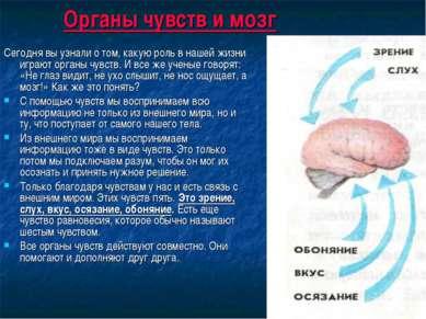 Органы чувств и мозг Сегодня вы узнали о том, какую роль в нашей жизни играют...