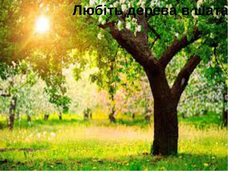 Любіть дерева в шатах