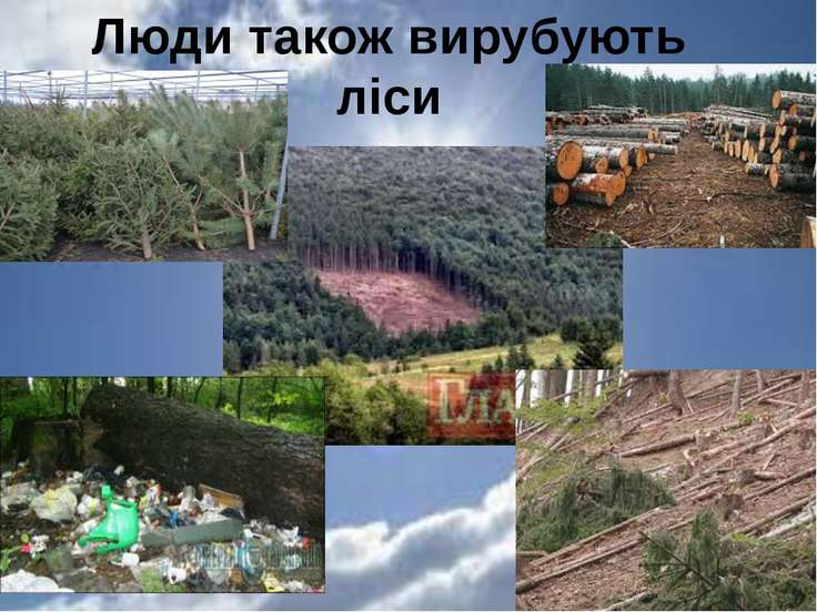 Люди також вирубують ліси