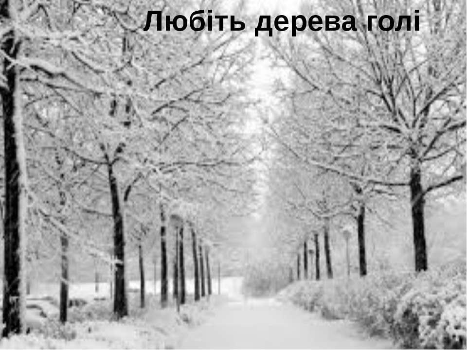 Любіть дерева голі
