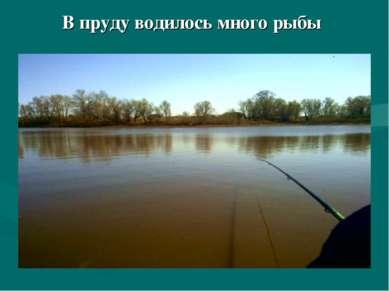 В пруду водилось много рыбы