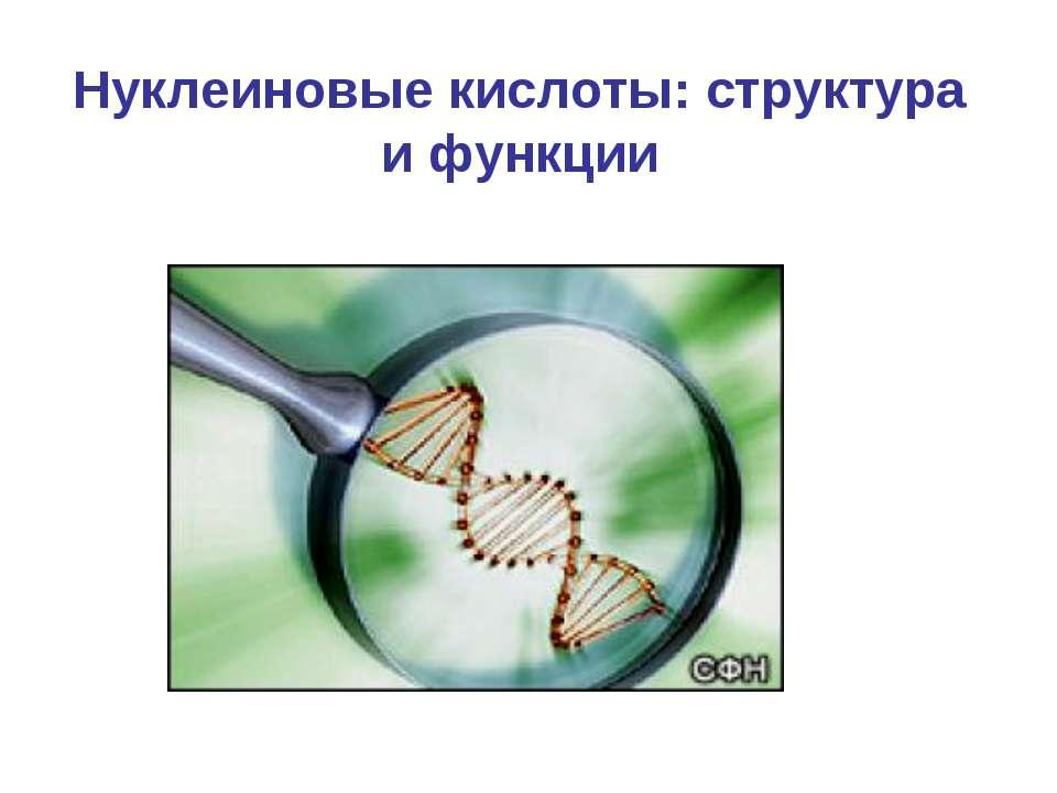 Нуклеиновые кислоты: структура и функции