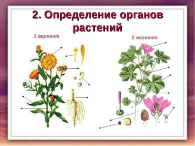 2. Определение органов растений 1 вариант 1 2 3 4 5 6 2 вариант 1 2 3 4 5 6 7 7