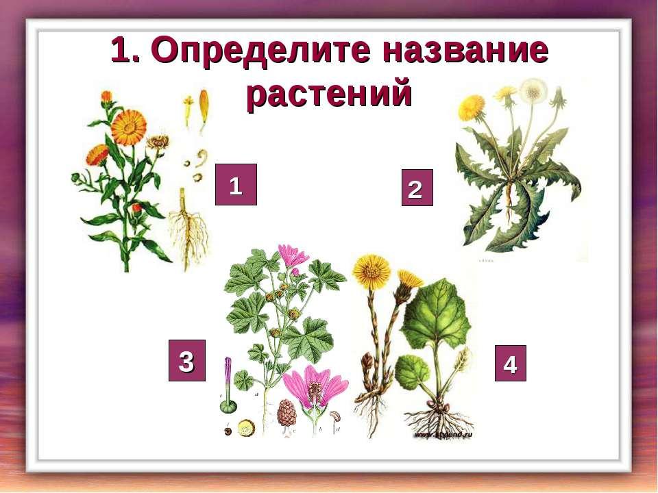 1. Определите название растений 1 2 3 4