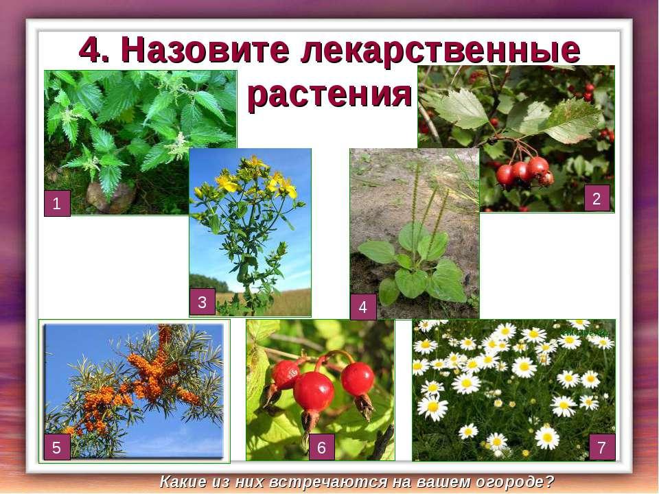 4. Назовите лекарственные растения 1 5 2 4 3 7 6 Какие из них встречаются на ...