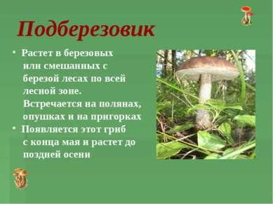 Подберезовик Растет в березовых или смешанных с березой лесах по всей лесной ...