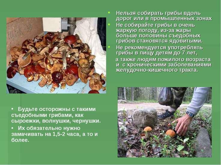 Нельзя собирать грибы вдоль дорог или в промышленных зонах Не собирайте грибы...