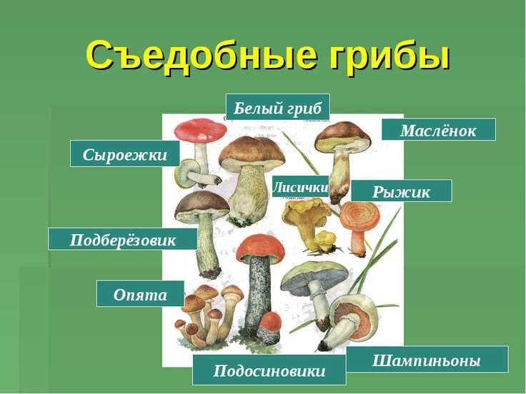 Съедобные грибы Шампиньоны Подосиновики Опята Рыжик Подберёзовик Сыроежки Бел...