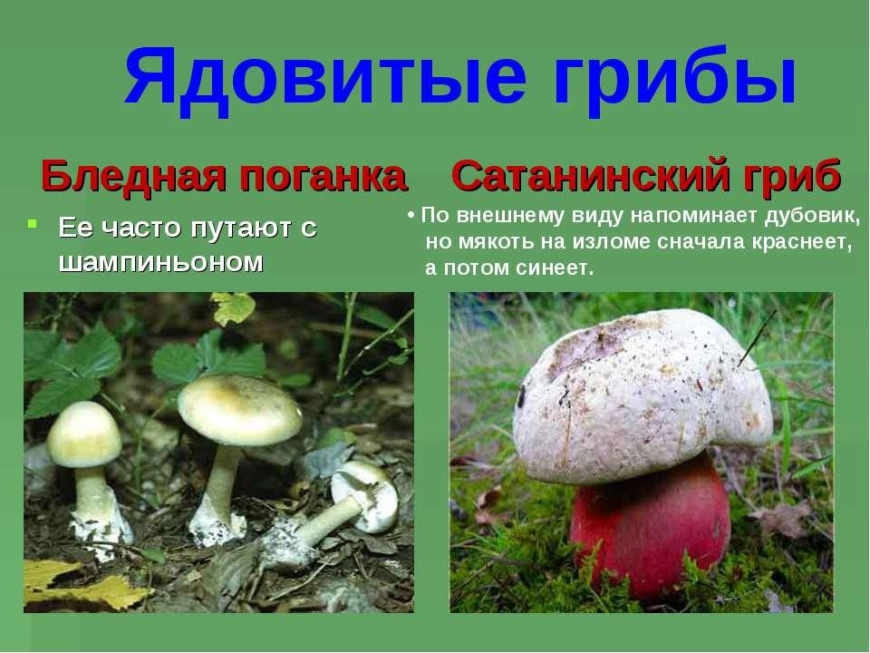 Бледная поганка Ее часто путают с шампиньоном Сатанинский гриб По внешнему ви...