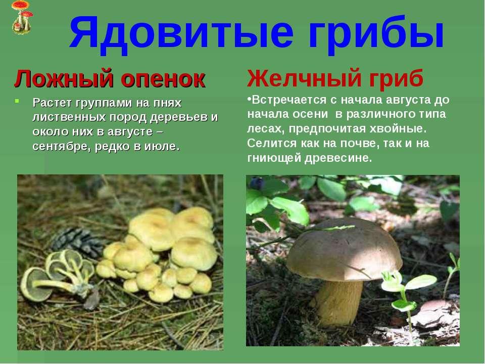 неядовитые грибы это какие
