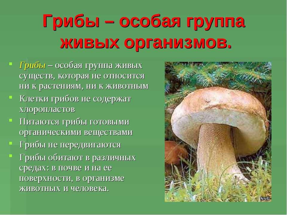 Грибы – особая группа живых организмов. Грибы – особая группа живых существ, ...