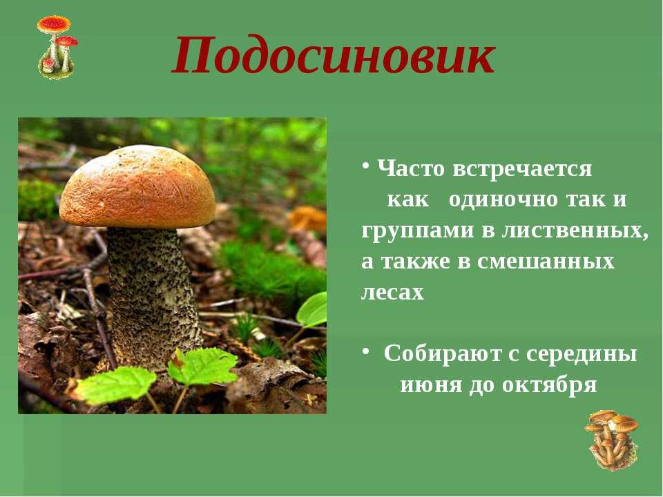 Часто встречается как одиночно так и группами в лиственных, а также в смешанн...