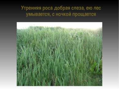Утренняя роса добрая слеза, ею лес умывается, с ночкой прощается