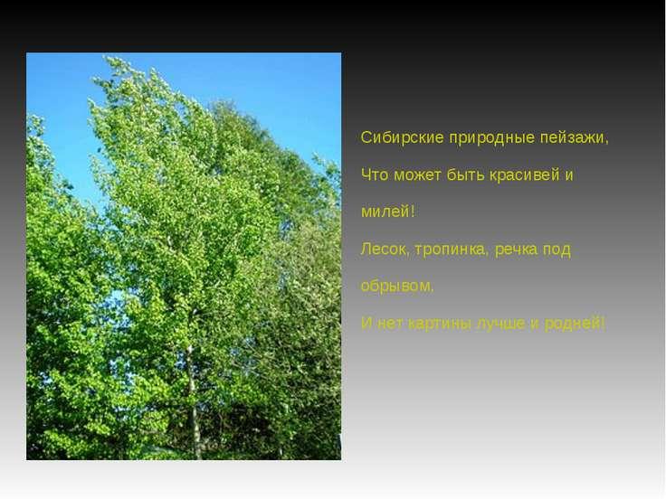 Сибирские природные пейзажи, Что может быть красивей и милей! Лесок, тропинка...