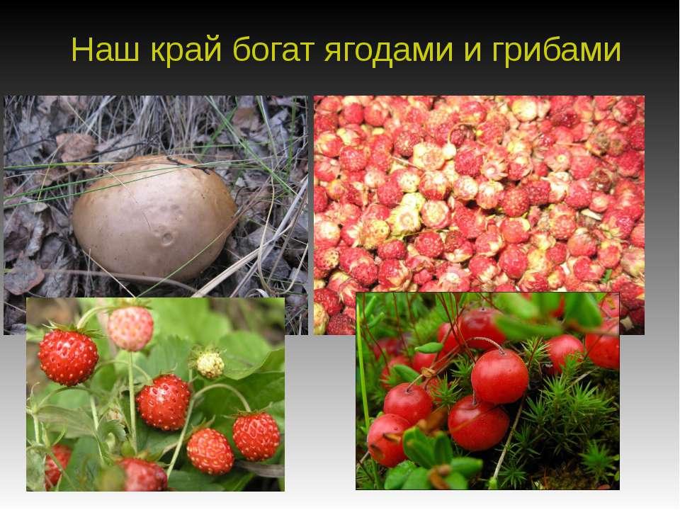 Наш край богат ягодами и грибами