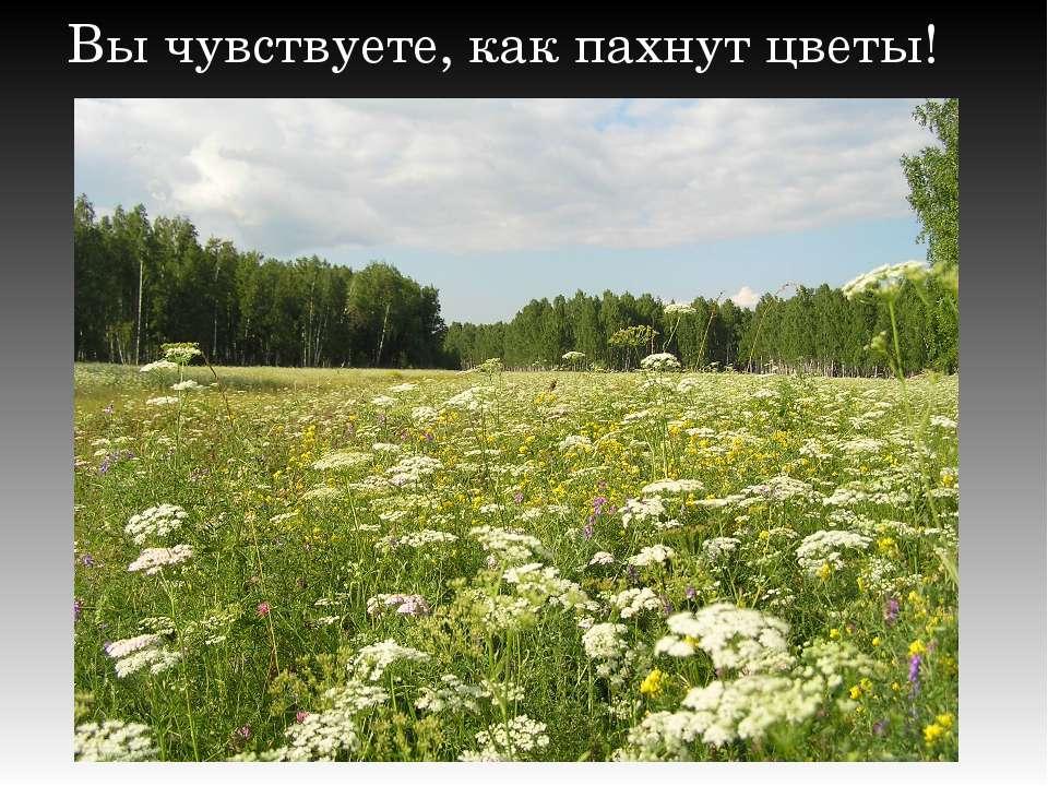 Вы чувствуете, как пахнут цветы!