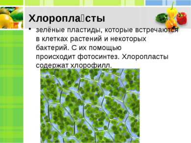 Хлоропла сты зелёныепластиды, которые встречаются в клетках растений и некот...