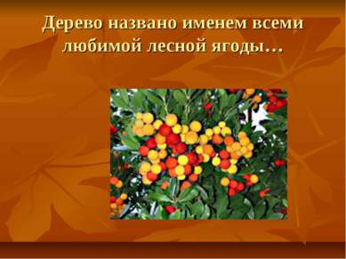 Дерево названо именем всеми любимой лесной ягоды…
