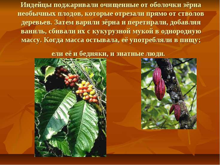 Индейцы поджаривали очищенные от оболочки зёрна необычных плодов, которые отр...