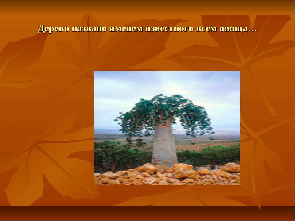 Дерево названо именем известного всем овоща…