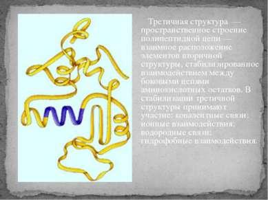Третичная структура — пространственное строение полипептидной цепи — взаимное...