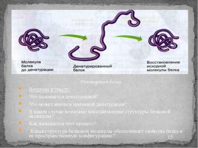 Денатурация белка Вопросы к тексту: Что называется денатурацией? Что может яв...