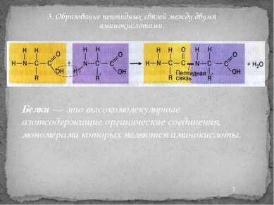 3. Образование пептидных связей между двумя аминокислотами. Белки — это высок...