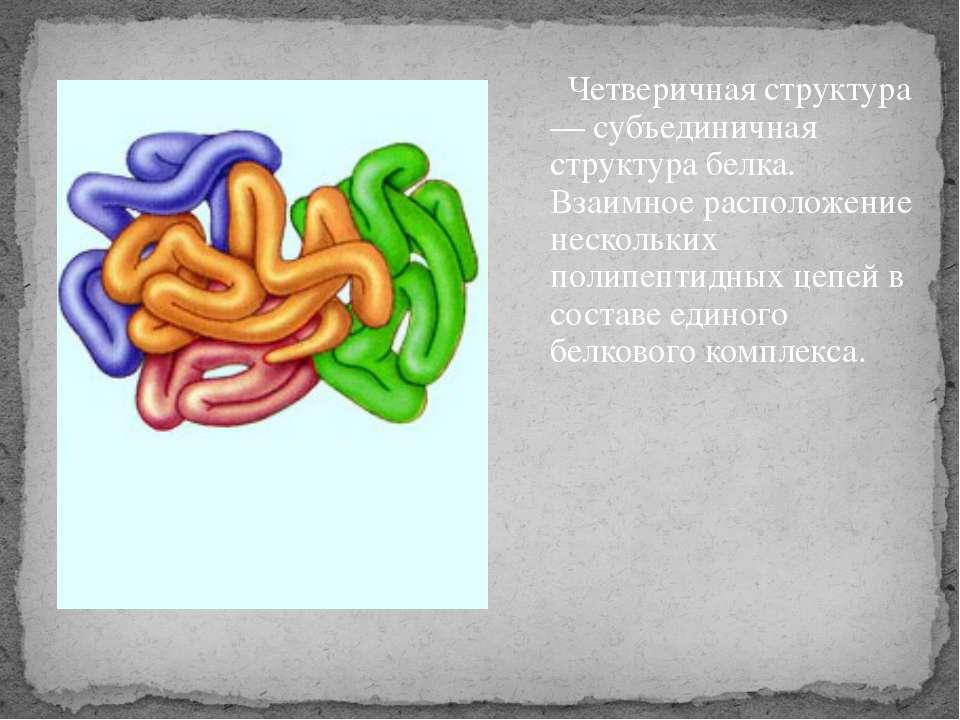 Четверичная структура — субъединичная структура белка. Взаимное расположение ...