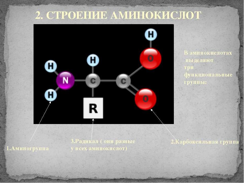 2. СТРОЕНИЕ АМИНОКИСЛОТ В аминокислотах выделяют три функциональные группы: 1...