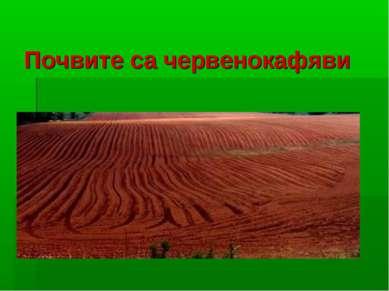 Почвите са червенокафяви