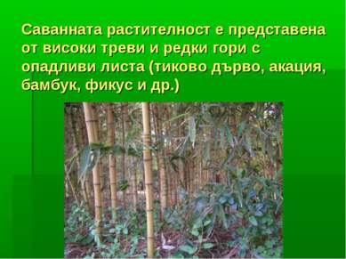 Саванната растителност е представена от високи треви и редки гори с опадливи ...