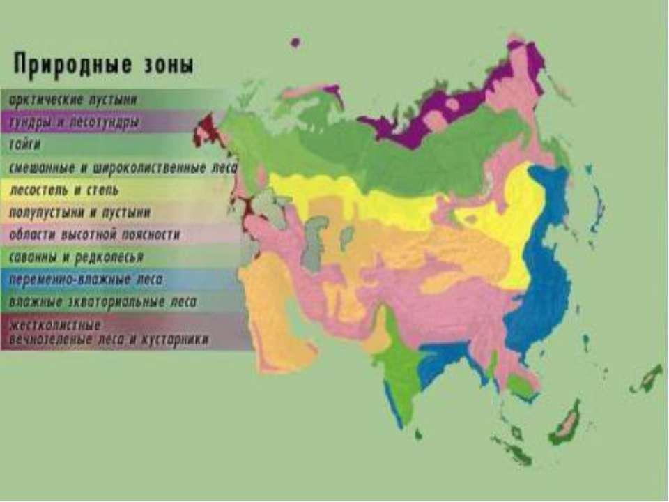 ПРИРОДНЫЕ ЗОНЫ ЕВРАЗИИ презентация к уроку Географии