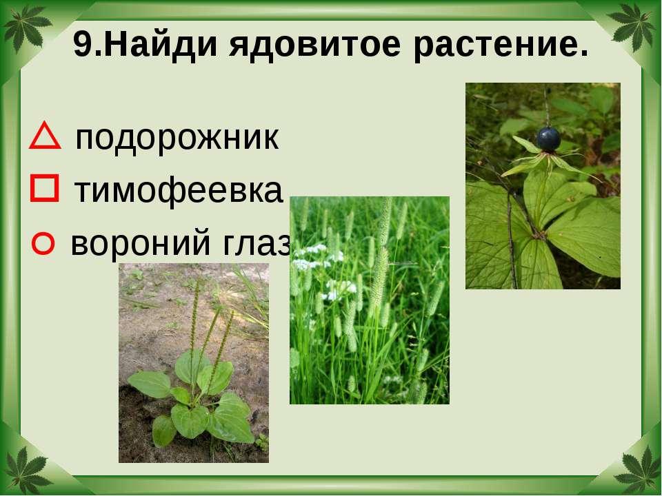 9.Найди ядовитое растение. подорожник тимофеевка вороний глаз