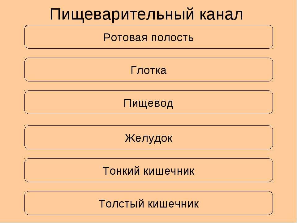 Ротовая полость Пищеварительный канал Глотка Пищевод Желудок Тонкий кишечник ...