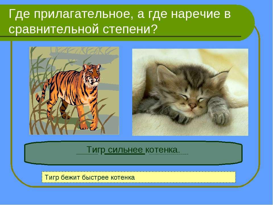 Где прилагательное, а где наречие в сравнительной степени? Тигр сильнее котен...