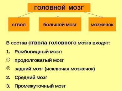 В состав ствола головного мозга входят: Ромбовидный мозг: продолговатый мозг ...