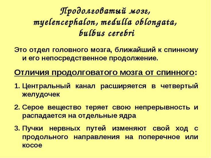 Продолговатый мозг, myelencephalon, medulla oblongata, bulbus cerebri Это отд...
