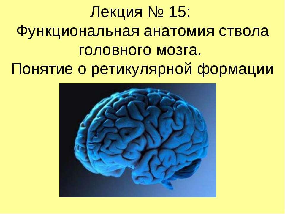 Лекция № 15: Функциональная анатомия ствола головного мозга. Понятие о ретику...