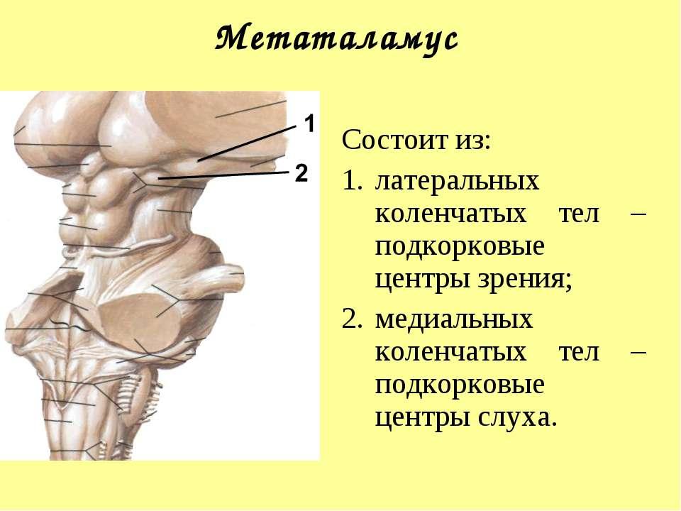 Метаталамус Состоит из: латеральных коленчатых тел – подкорковые центры зрени...